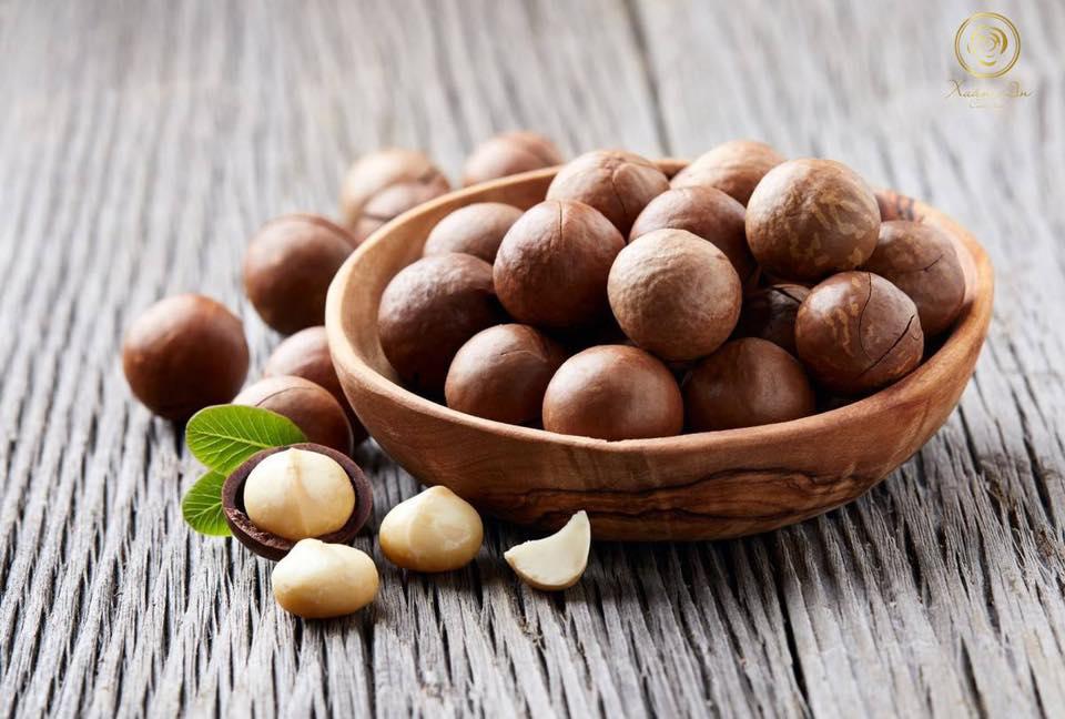 Giá trị dinh dưỡng trong từng hạt mắc ca Việt Nam